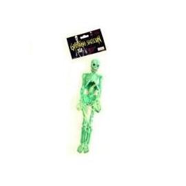 Squelette Humain à Faire Grandir