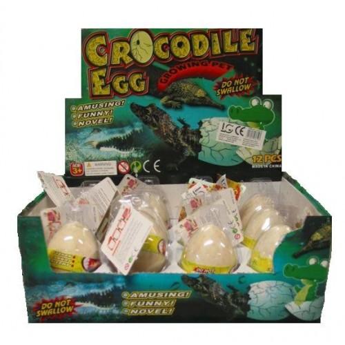 Présentoir de 12 Oeufs de Crocodile